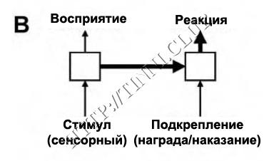 Развитие и затухание условных рефлексов. Часть B