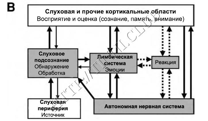 Сознательная и подсознательная системы. Обратные связи на подсознательном уровне.