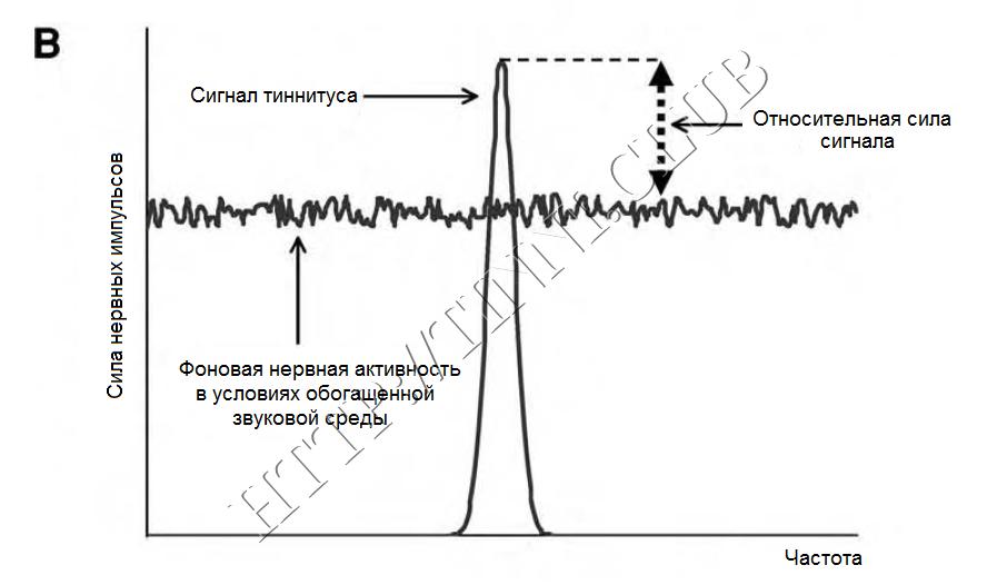 Сигнал тиннитуса в сравнении с фоновой нервной активностью. Часть B